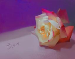情人节的花